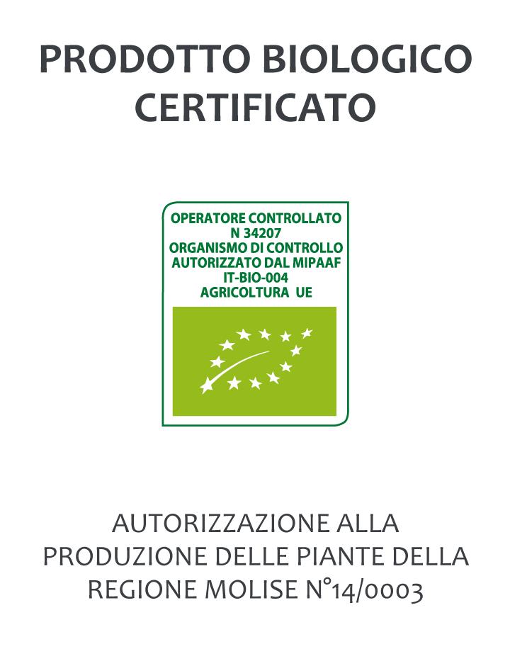 Piantina Aloe Arborescens