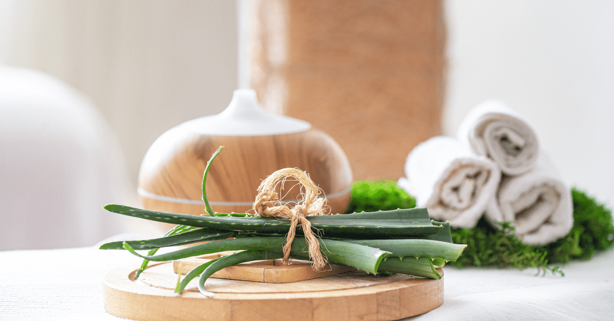 pianta aloe vera come coltivarla a casa